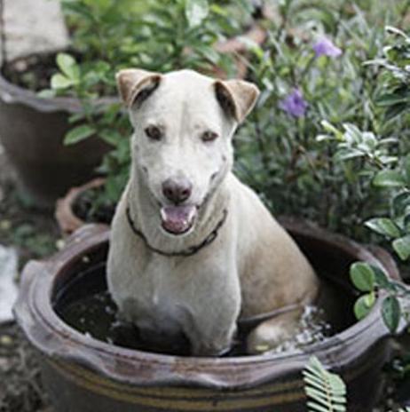 资料图片:流浪狗。