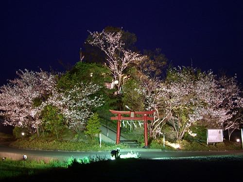 """资料图:日本最矮的自然形成山""""弁天山""""。"""