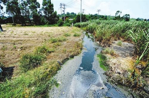 养猪场旁边的水沟和农田成了猪场的排放池,又脏又臭-镇政府 该猪场