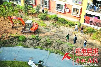 合肥一小区为建停车位铲毁绿化带图片