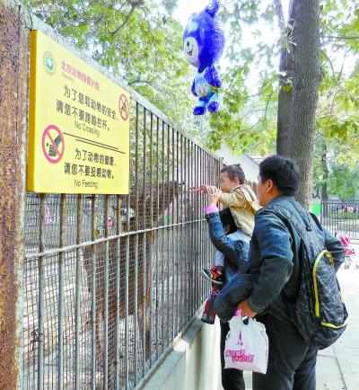 北京动物园里,家长带小朋友在喂动物胡萝卜,旁边黄色的警示牌形同虚设