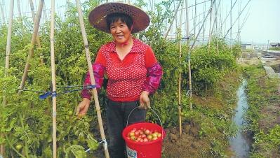 海澄镇罗坑村,得益于灌溉用水有保障