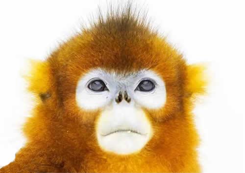 """猴年去哪看猴?石家庄动物园邀您来观""""百猴贺岁"""""""