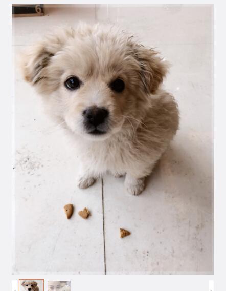 张馨予晒与小狗合影 造型甜美可爱(图)