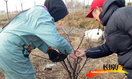 中捷完成52000株树木冬季修剪整形工作