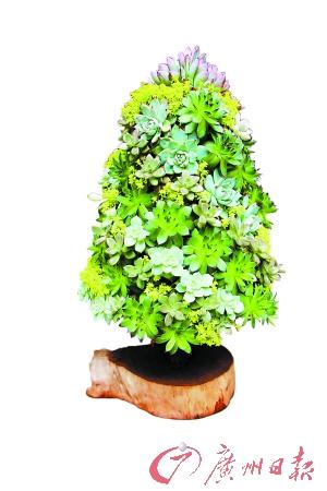创意组合盆栽。
