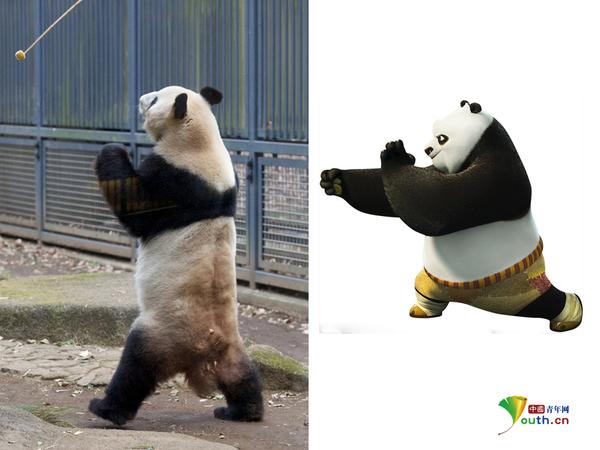 """日本东京上野动物园,一头大熊猫表演功夫绝技,堪称真实版""""功夫熊猫""""."""