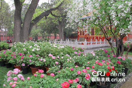 展览将重现清代紫禁城牡丹花开的盛况