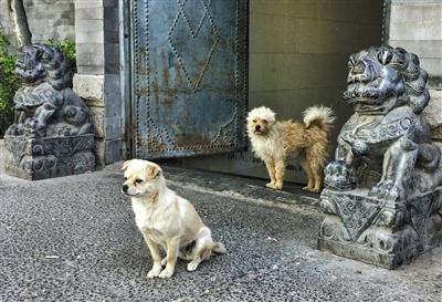 原标题:小伙伴 时间:4月20日 地点:永泰庄北路 场影:两只小狗陪着图片