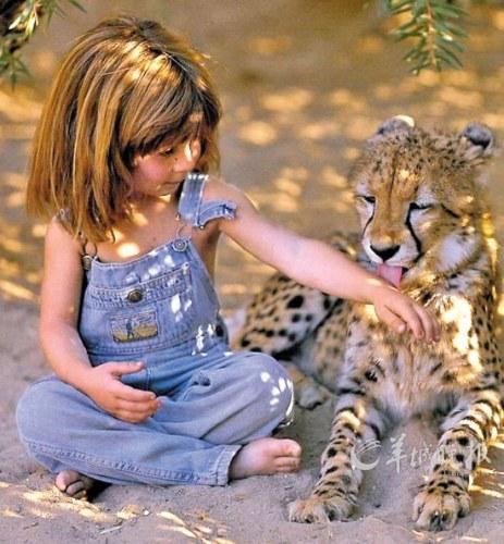 cheetah lick hands