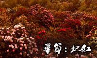 百里杜鹃红 毕节留异香
