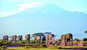 肯尼亚野生动物保护区内的大象。