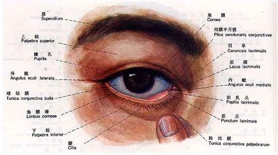 眼睛结构(资料图)-MCT技术领先复查制度 甘当眼睛健康卫士