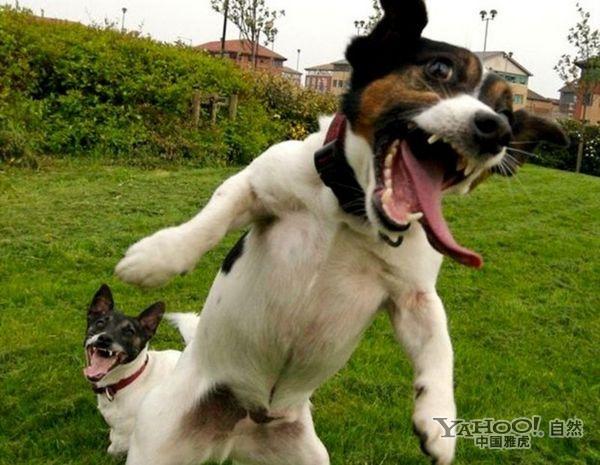 > 图片 >  自然动物 > 正文  关键词:            动物大笑快乐