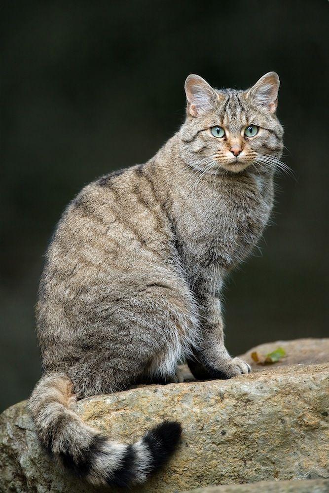 对骨骼的测量表明这些猫是草原斑猫.