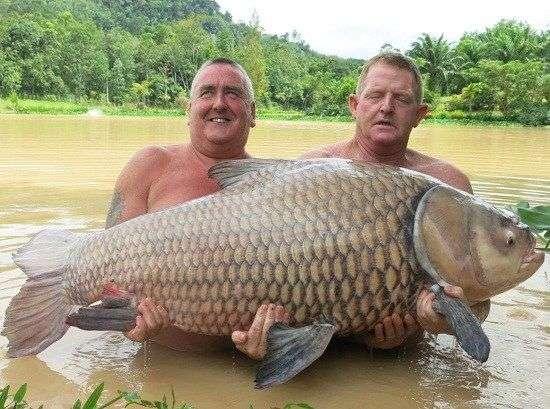 男子仅用面包片钓上68公斤巨型鲤鱼合照后放生