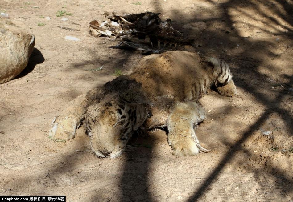很多动物因为得不到照顾死亡,剩下的也大多奄奄一息.动物园的图片