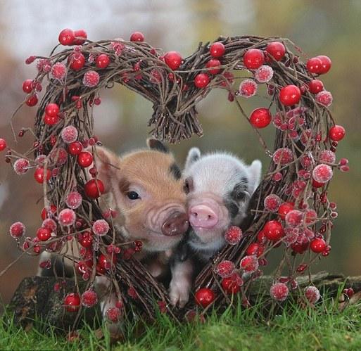 小动物情侣甜蜜浪漫 依偎 长吻令人类艳羡