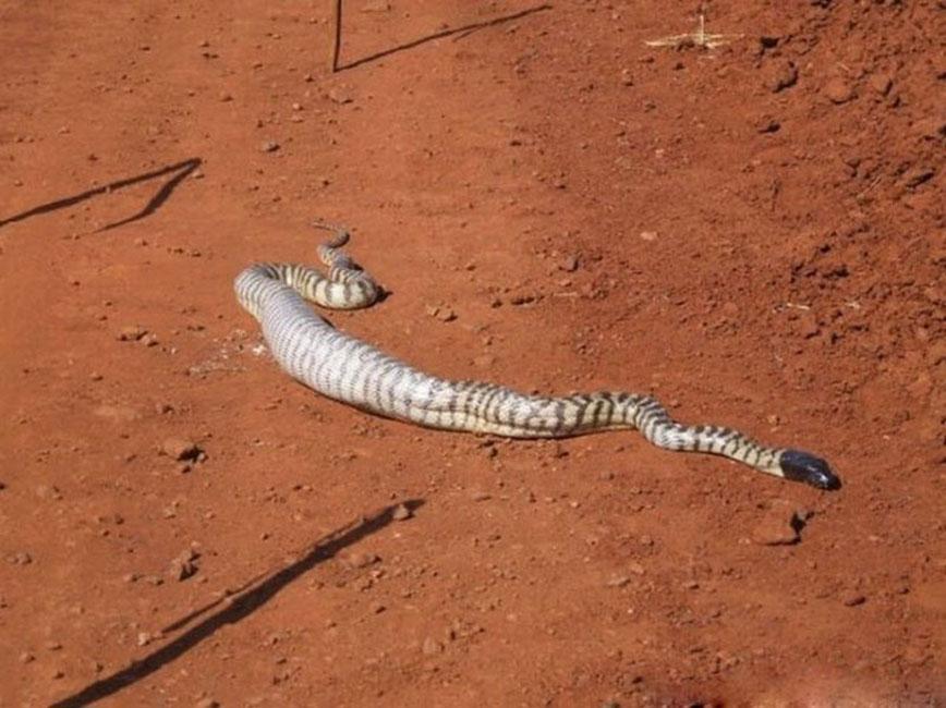 刚刚梦见一条白色花纹的巨蛇,以前也梦到过,情景有点像,然后发现这