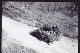 一辆伪装过的中国第五陆军装甲车在缅甸公路上快速开往龙陵的前线。1944年9月10日。