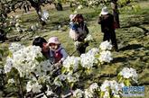 """4月13日,游客抱着孩子在花丛中赏花。当日,第五届房山琉璃河梨花文化节在北京市房山区琉璃河镇京白梨大家族主题公园开幕。琉璃河镇自古就有""""京南梨乡""""之称,梨树种植面积过万亩,树龄最长在300年以上。据农业专家预测,今年琉璃河梨花花期将持续到4月20日左右,盛花期则在4月15日左右。新华社记者 张宇摄"""