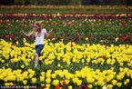 美国木鞋郁金香农场 孩子们的童话乐园