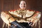 英国将展出巨型帝王蟹 每只有18斤蟹肉