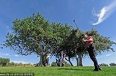 葡萄牙:欧洲的高尔夫球手们蜂拥来到葡萄牙阿尔加夫(Algarve),如今这个地方也逐渐在美国球手中流行起来。你在葡萄牙的高尔夫之行其实可以包括很多内容,比如访问圣洛伦索(San Lorenzo)、罗伯山谷(Vale de Lobo)、维拉摩拉(Vilamoura)和金塔湖(Quinta do Lago)。这些地方不仅以豪华高尔夫球场闻名,还以食物和美酒着称。边打高尔夫球,边旅行?众所周知,许多高尔夫选手正是利用假期到世界各地尝试不同球场风格的。