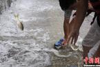 杭州大雨致积水严重 市民水中捕鱼