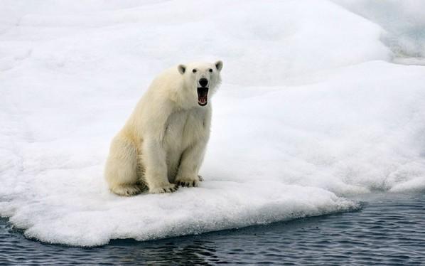 萌翻啦!极地海洋动物们可爱表情(高清)
