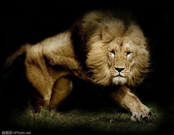40张惊人的动物特写摄影作品[图集]
