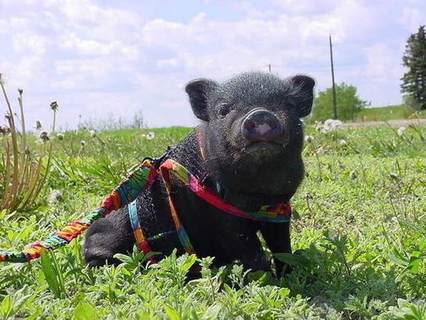 12个动物救了人类的感人事迹