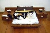 猫咪专属的大床(实习编辑:石君兰)