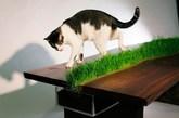 很有绿意的桌子(实习编辑:石君兰)