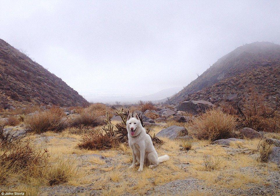 带着狗狗去旅行 高清图片