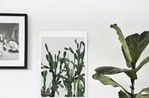 画、花。花非花,绿植也。画中仙人掌的圆饼和画外绿植的圆叶相触碰,但有刺的,还是置于画中好些,就让画外的叶子舒展在空气中吧。(实习编辑 孟璇)