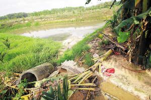 养猪场污水直排水塘。海南日报记者 陈元才 摄