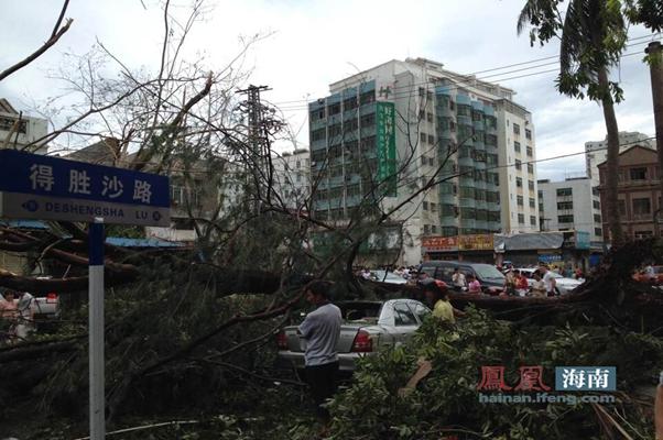 """台风""""威马逊""""过后,海口得胜沙路树木大多被摧毁。"""