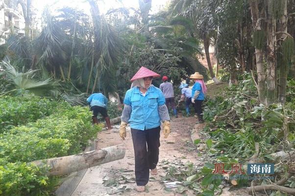 台风造成的破坏忙坏辛苦的园林工。