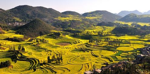 江西农村婺源的油菜花是另一种意韵.图片
