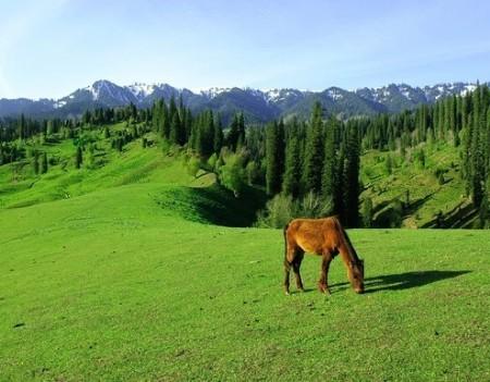 仰天湖草原 行走在南国草原上