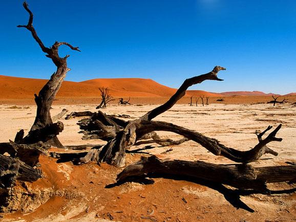 再配以形态怪异的枯树和动物们在沙漠上拉长的影子……面对这样一幅画