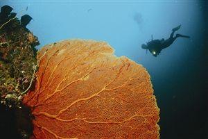 普吉岛PP岛潜水