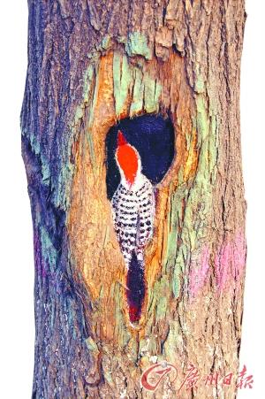 那一个又一个藏匿在树洞里的惟妙惟肖的童话世界,既感动了过路的途人