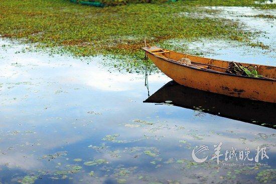 洱海漂浮着细细的水草