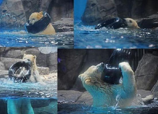 北极熊自创健康操