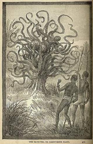 非洲海岛上出现可怕的食人树
