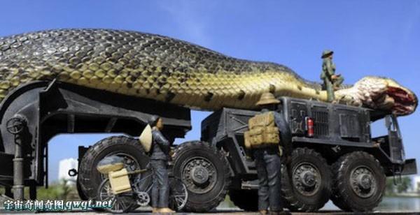 图揭辟谣:北京动物园抓获巨蟒蛇 比火车头还粗大