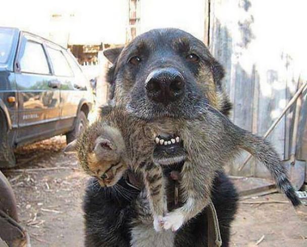 乌克兰狗狗冒死冲回火场救猫猫