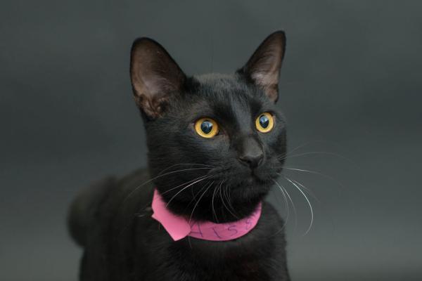 人们觉得黑猫不吉利,是恶魔的象征,会带来噩运.